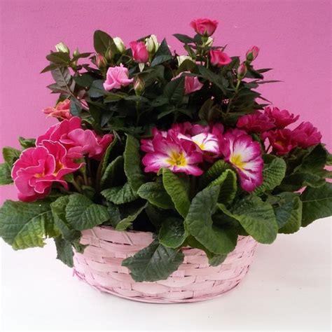 piante a cespuglio fiorite piante fiorite di stagione in armonia dalla gradazione