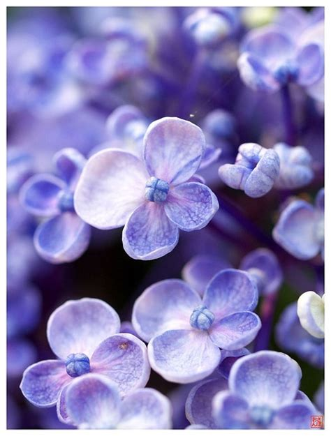 hues of purple 17 best images about hues of purple on pinterest purple