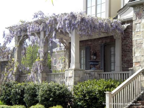 Pergola Front Porch With Wisteria Curb Appeal Pinterest Front Porch Pergola