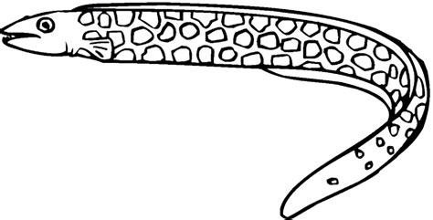 Eel Printable Coloring Pages Coloring Eel Coloring Page