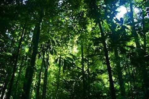 Plants In The Tropical Rain Forest - 10 interesting rainforest facts my interesting facts