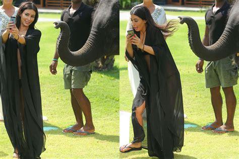 kim kardashian and elephant watch elephant fights back during kim k selfie attempt
