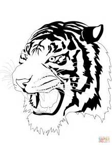 stripeless tiger coloring page tiger without stripes coloring page tiger head drawing