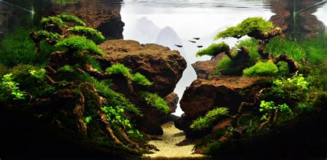 aquascape pictures planted tank jurang mayit by herry rasio aquarium design