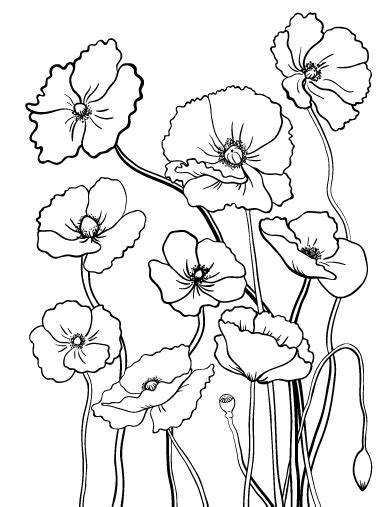 printable poppy flowers printable poppy coloring page free pdf download at http