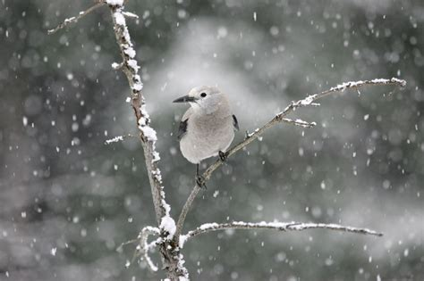 bird s the word in winter help feed them espoma