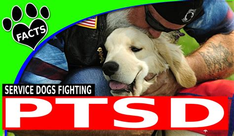 ptsd service ptsd service dogs top service breeds for with ptsd animal facts