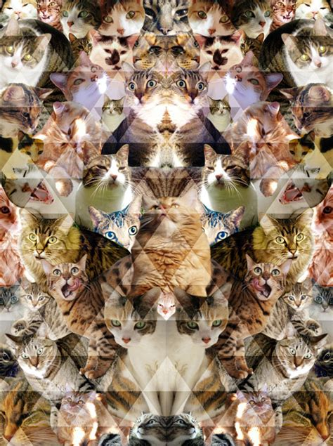 cat wallpaper collage cats 1 pattern people print studio