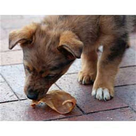 are pig ears safe for puppies select premium smoked pig ears chews pet equipment supplies pet chews