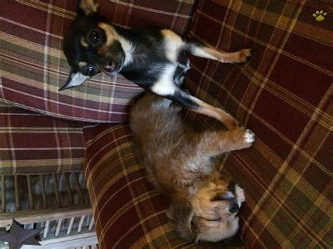 lancaster puppy testimonials lancaster puppies