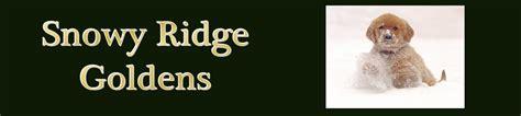 golden retriever michigan breeders golden retriever golden retrievers puppies breeder breeders michigan