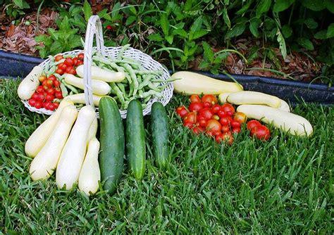 fall garden vegetables prepare now for vegetable season the post newspaper
