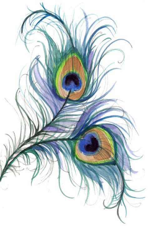 pretty peacock feather drawing creativefan peacock peacock line drawings beautiful