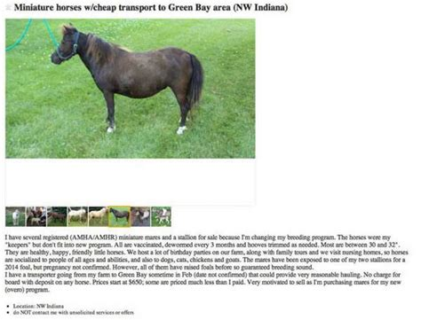 what is backyard breeding backyard breeding is the blight of the horse industry