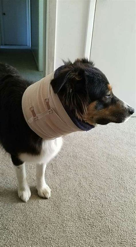 cone alternative best 25 cone ideas on cone collar pet and diy gifts