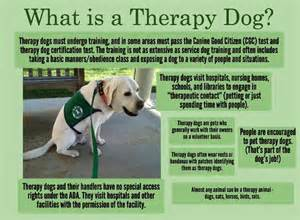 Comfort Dog Certification 25 Best Ideas About Therapy Dogs On Pinterest Therapy
