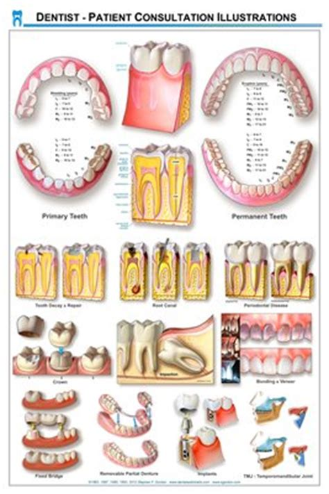 printable dental poster collection dental wall charts magcloud