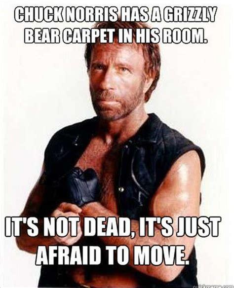 Bear Stuff Meme - 99 best chuck norris the 1st meme images on pinterest