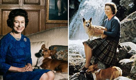 the queen s corgis the queen s favourite dog the corgi makes a comeback