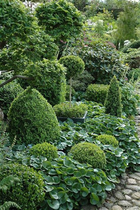 Evergreen Garden by Fabulous Garden Of Evergreens And Lots And Lots Of Hostas