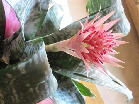 fiore pianta grassa fiore di pianta grassa foto immagini piante fiori e