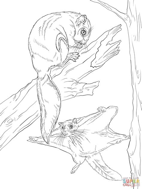 coloring page flying squirrel flying squirrels free coloring pages