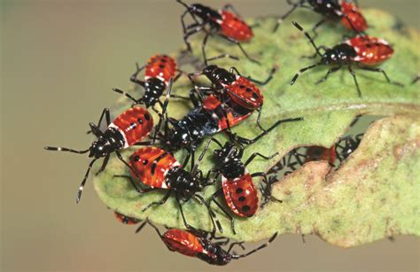 australian garden pests 10 best images about garden pests diseases and bugs