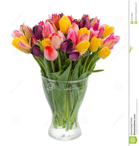 Pictures Of Tulips In Vases by Fresh Tulips In Vase Stock Photos Image 35444953