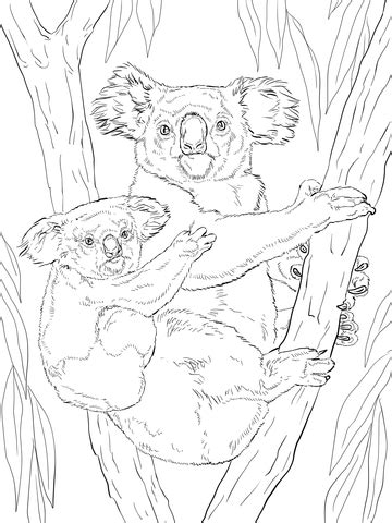 Realistic Koala Coloring Pages | koala with baby coloring page supercoloring com