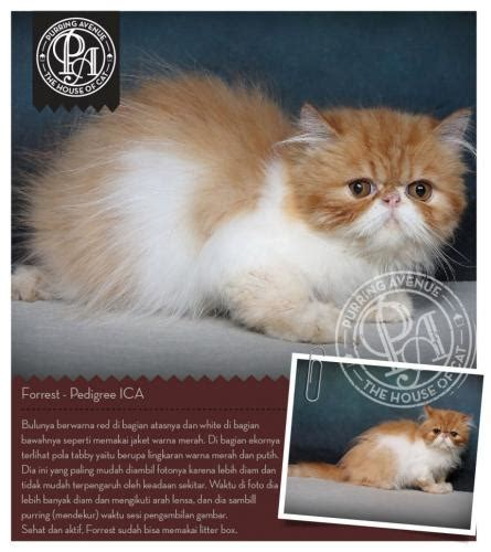 Jual Kandang Kucing Bekas Wilayah Malang forrest warna white bicolor tanggal lahir 12 07 2013