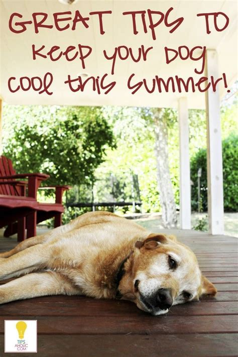 Keep Your Cing Food Cool by Tips For Keeping Your Cool This Summer Pets Dogs
