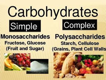 carbohydrates webquest macromolecules are large organic molecules macromolecule