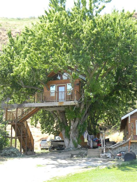 amazing tree house wallpapers amazing tree house wallpapers