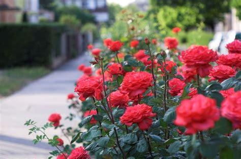 lavori giardino febbraio lavori mese giardino febbraio lavori mese