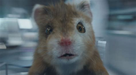 Kia Commercial Hamster Kia Soul Turbo Commercial Song The Turbo Hamster