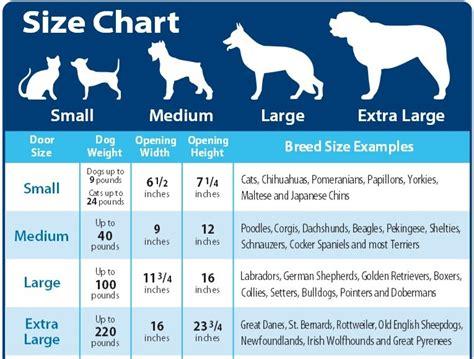 rottweiler size and weight chart rottweiler size chart rottweiler puppy height and weight chart photo