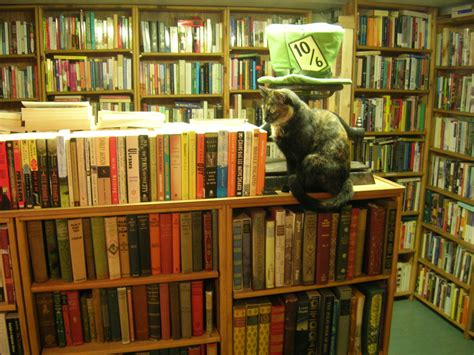 Bookcase Company Bookstore Cat At Ophelias Books This Cat Knows Its Place