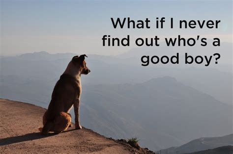 what do dogs think about what do dogs think here is the answer and it s amazing