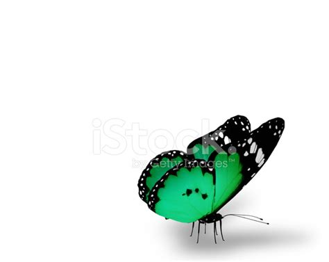 Gamis Buterfly Premium White Pasmina green butterfly on white background stock photos freeimages