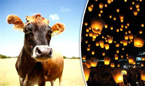 new year animals uk rspca calls for ban on new year lanterns amid claims they