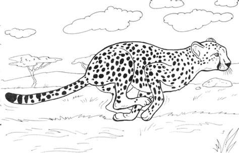 kolorowanka gepard biegnie kolorowanki dla dzieci  druku