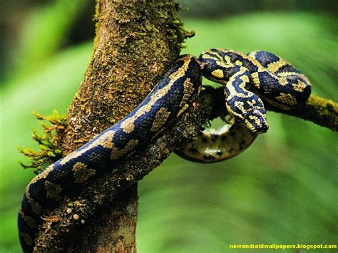 awesome and dangerous snakes wallpapers of 2013 for