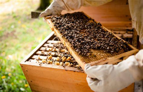Incroyable Installer Ruche Dans Son Jardin #1: une-ruche-dans-un-jardin-1.jpg