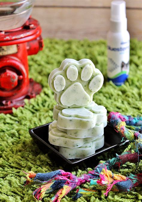 can dogs mint 9 minty fresh treat recipes you need for your s breath my s name