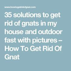 how to get rid of mosquitoes in my backyard 25 b 228 sta gnats away id 233 erna p 229 pinterest cing ideas