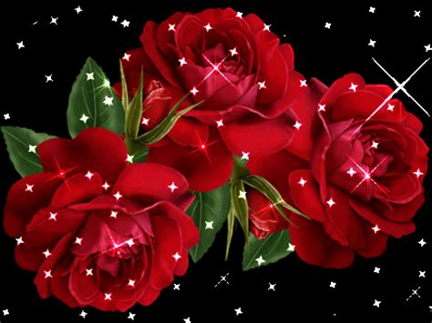 imagenes rosas varias imagenes en movimiento de rosas para celular