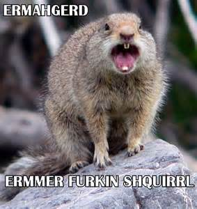 Ermahgerd Animal Memes - pin by stefanie roberts on ermahgerd pinterest
