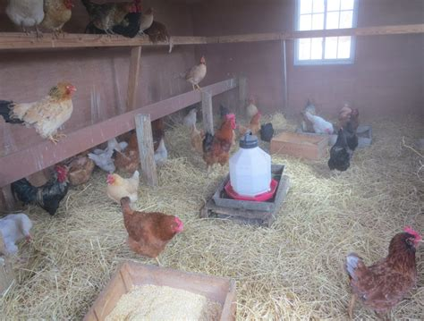hen house from hen house to farm house oh ricky you re so fine greenwich free press