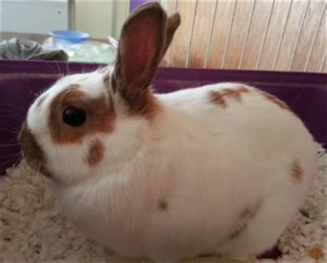 7 Facts On Bunny Rabbits by Bunny Rabbit Facts For