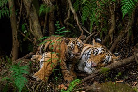 National Geographic Wildlife meet steve winter national geographic wildlife photographer